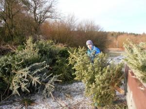 Weihnachtsbaum-Sammelaktion