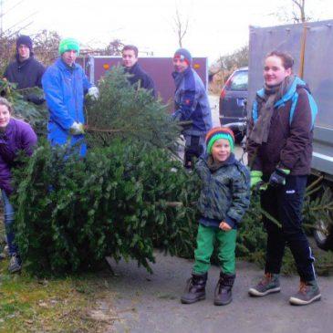 Sammeln alter Weihnachtsbäume