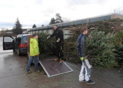 Weihnachtsbaum sammeln